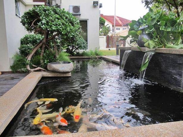 kolam-ikan-koi-berdesain-sederhana-minimalis-nan-indah-004