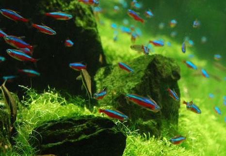 Top 100 Best Aquascaping Fish - Blog Bersama