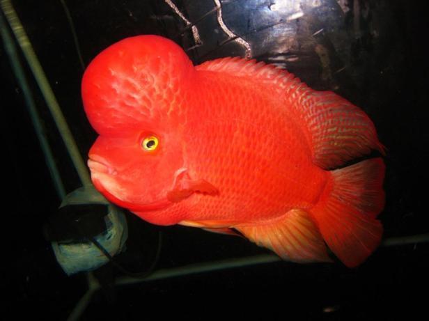 Super-Red-Synspillum.jpg